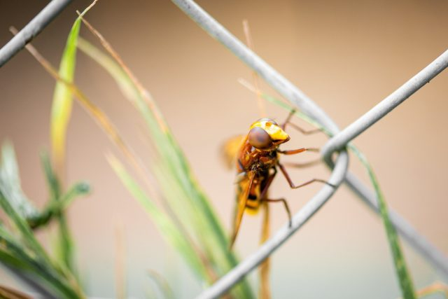Charles Darwin was right about why insects are losing the ability to fly
