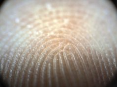 Fingerprints moisture regulating mechanism strengthens human touch