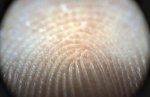 Fingerprints moisture regulating mechanism strengthens human touch