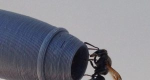 Keyhole wasps may threaten aviation safety
