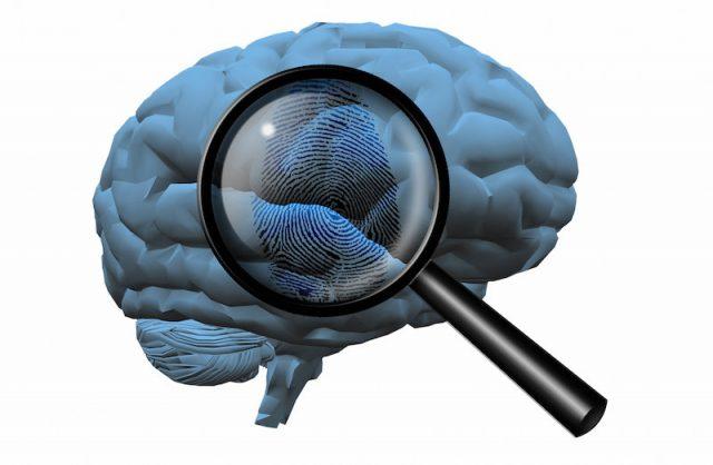 Memories create fingerprints that reveal how the brain is organized