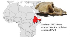 Mummified baboons shine new light on the lost land of Punt