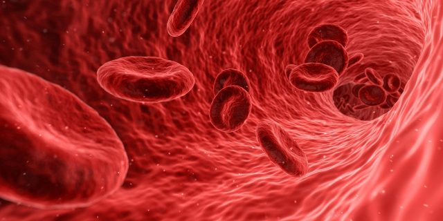 New method to boost supply of life saving stem cells