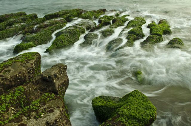Ocean heatwave has triggered new toxic algal blooms on the US west coast