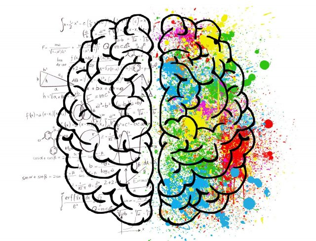 The DNA regions in our brain that contribute to making us human