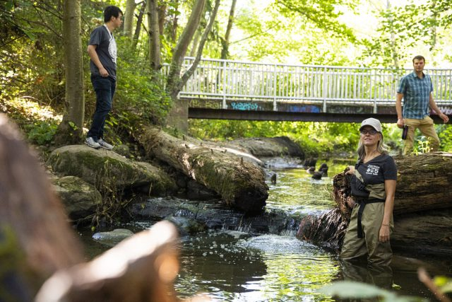 Tire related chemical is largely responsible for adult coho salmon deaths in urban streams