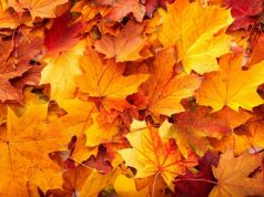 Which factors trigger leaf die off in autumn