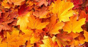 Which factors trigger leaf die off in autumn