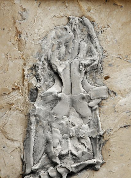 Worlds earliest python identified from 47 million year old fossil remains