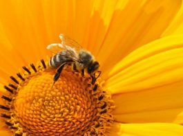 Common pesticides stop bees and flies from getting a good nights sleep
