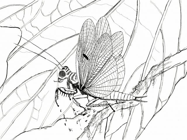 Discovery of new praying mantis species from the time of the dinosaurs