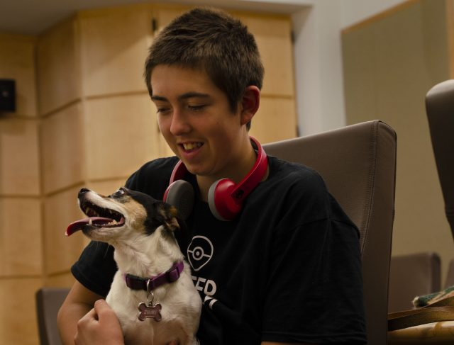 Dogs synchronize their behavior with children but not as much as with adults study finds