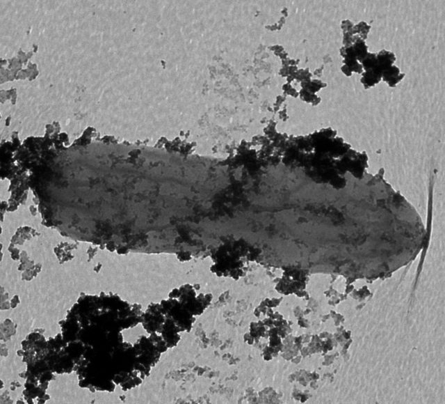How Iron Man bacteria could help protect the environment