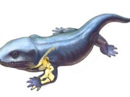 How did forelimb function change as vertebrates acquired limbs and moved onto land