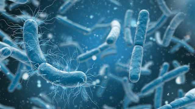 New class of antibiotics active against a wide range of bacteria