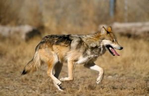 New management approach can help avoid species vulnerability or extinction