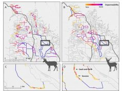 New study reveals how fences hinder migratory wildlife in the West