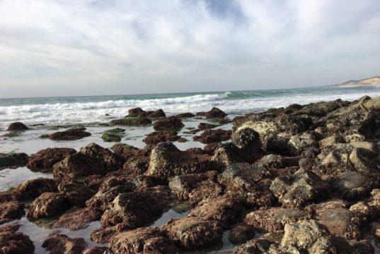 Ocean acidification is transforming California mussel shells