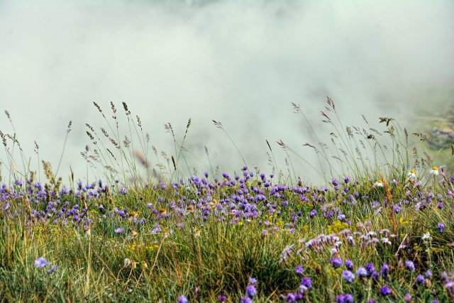 Uncovering how grasslands changed our climate