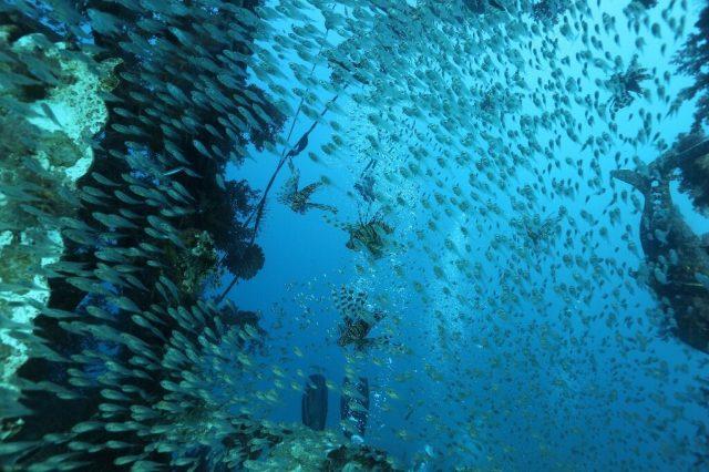 Warming driving Eastern Mediterranean species collapse