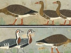 Ancient art reveals extinct goose