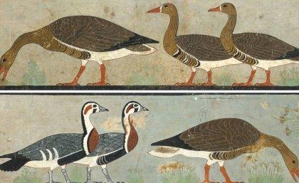 Ancient art reveals extinct goose