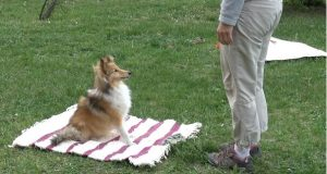 Dogs may have body awareness and understand consequences of own actions