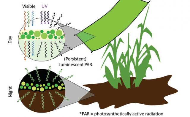 Engineering light availability for crop production