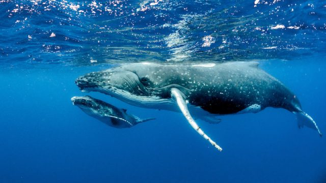 Healthy oceans need healthy soundscapes