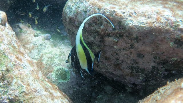 High carbon dioxide to slow tropical fish move to cooler waters