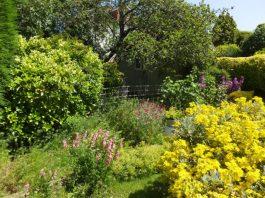 Pioneering research reveals gardens are secret powerhouse for pollinators