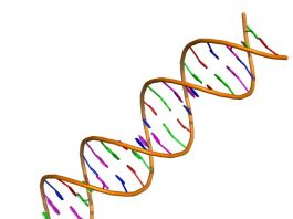 Researchers invent new gene editing tool