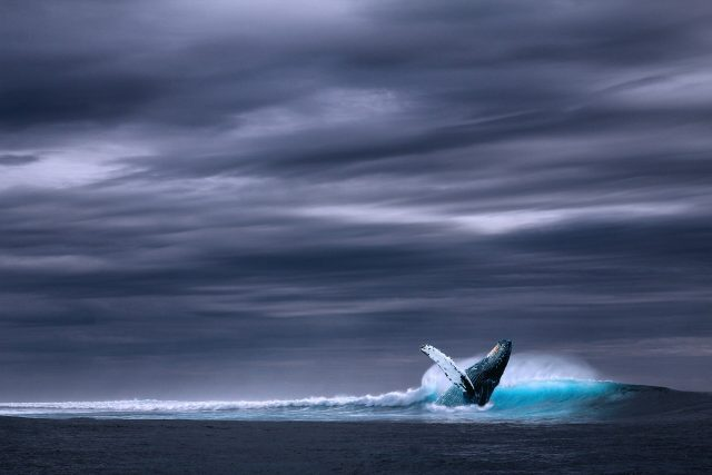 The songs of fin whales offer new avenue for seismic studies of the oceanic crust