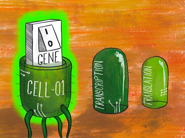 Bioengineers learn the secrets to precisely turning on and off genes