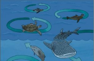 Enigmatic circling behavior captured in whales sharks penguins and sea turtles