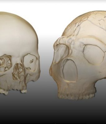 Neandertals had the capacity to perceive and produce human speech