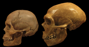 Neanderthal and early modern human stone tool culture co existed for over 100000 years