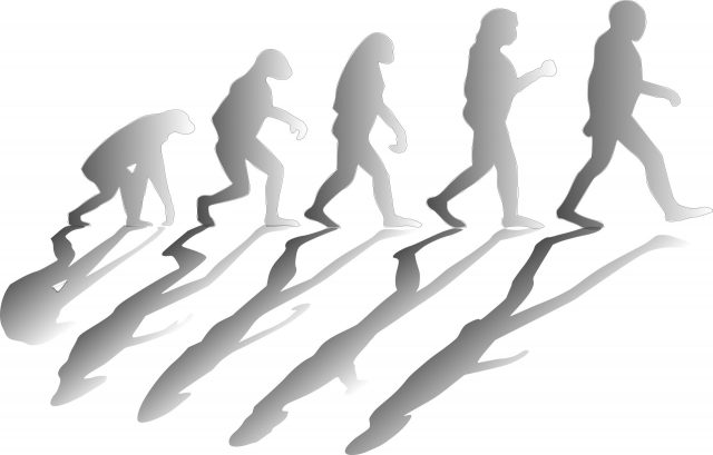 New study suggests humans evolved to run on less water than our closest primate relatives