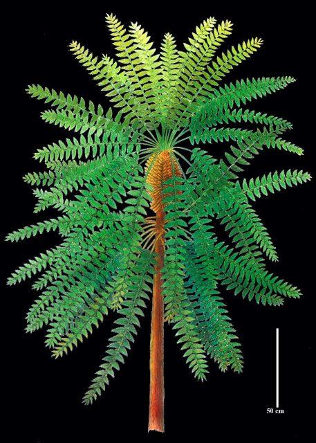Pompeii of prehistoric plants unlocks evolutionary secret