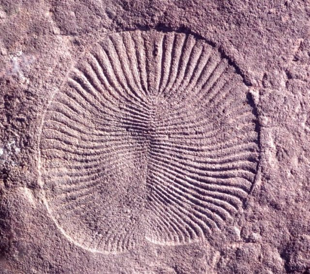 Research shows were surprisingly similar to Earths first animals