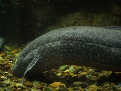 Researchers solve puzzle of water to land transition of vertebrates