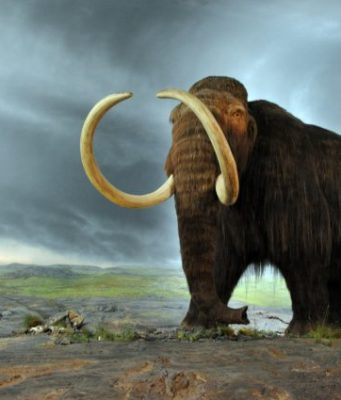 Woolly mammoths may have shared the landscape with first humans in New England