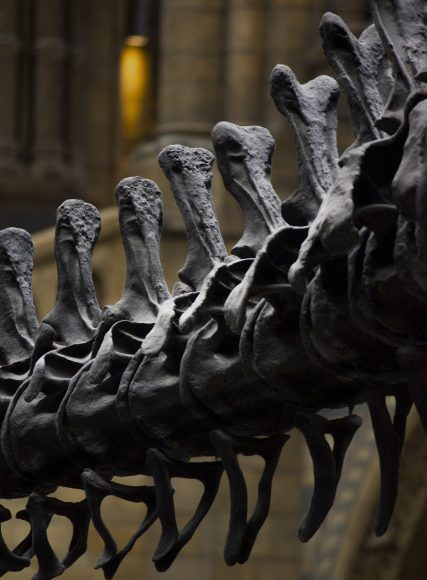 A dinosaur tail vertebra leads researchers on the right track