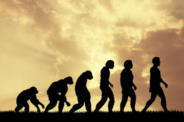 Analysis of famous fossil helps unlock when humans and apes diverged