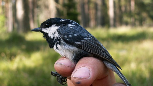 Birds blood functions as heating system in winter