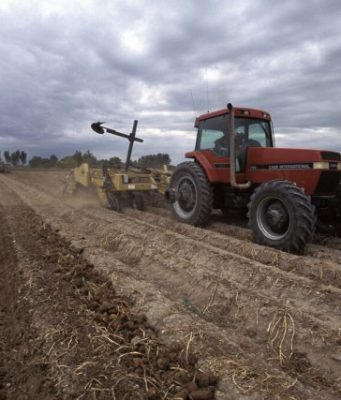 Climate change cut global agricultural productivity 21 since 1960s