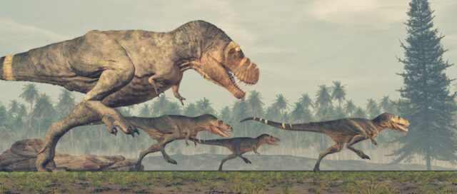 Fearsome tyrannosaurs were social animals study shows