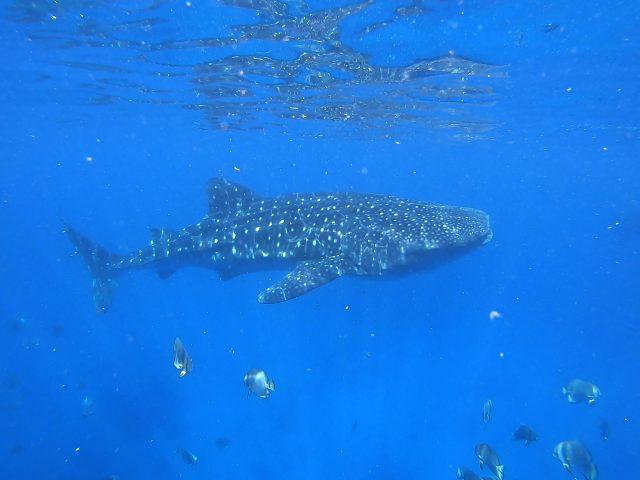 Greenland Shark Photo by Olga Tsai via Unsplash