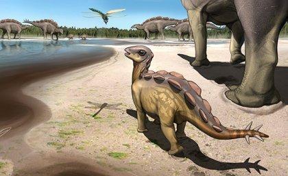 International paleontology team discovers tiny cat sized stegosaur