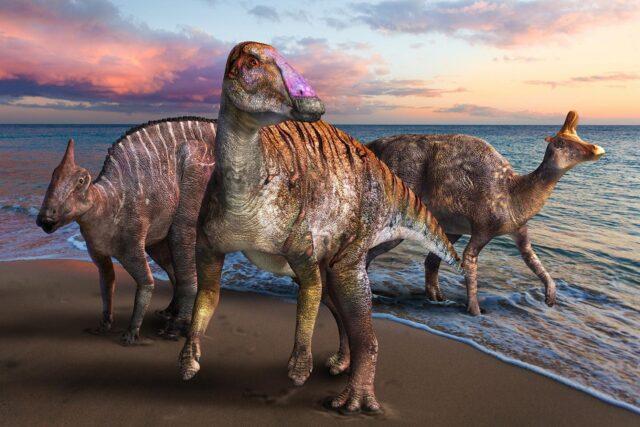 New duckbilled dinosaur discovered in Japan